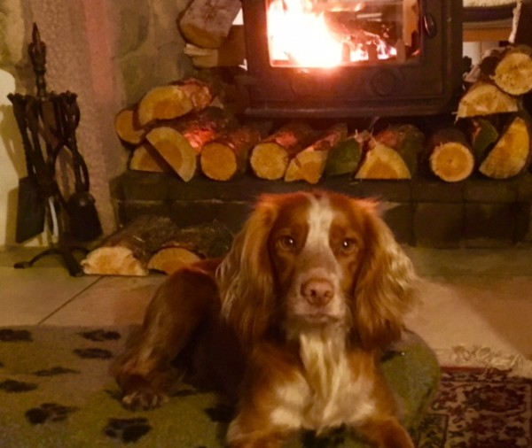 9c_Cosy_for_dogs_too.png